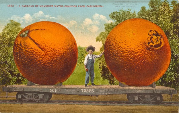 A carload of mammoth navel oranges from California, Library of Congress LC-DIG-ppmsca-19095