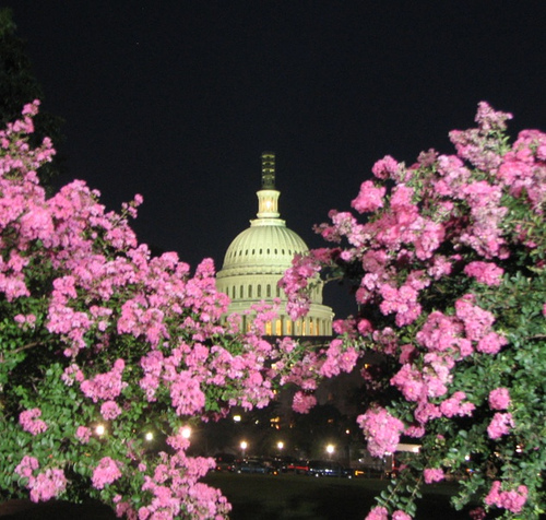 Capitol with Crepe Myrtles
